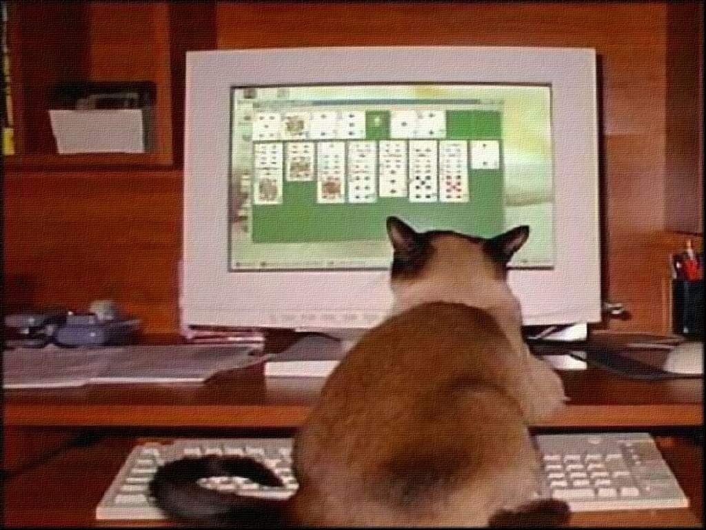 Chats ordinateur - Centerblog